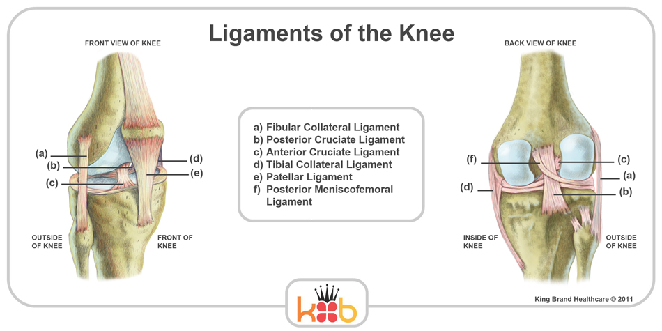 King Brand Knee Image Diagram Ligaments Bones Knee Injury Solutions Ice Packs Wraps