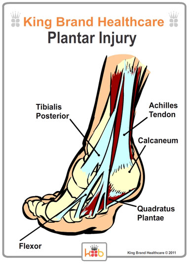 King Brand Back View of Foot with Plantar Injury Labelled Diagram Tendons