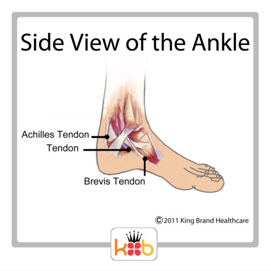 King Brand Ankle Injury Side View Tendons Bones Diagram Image Labelled