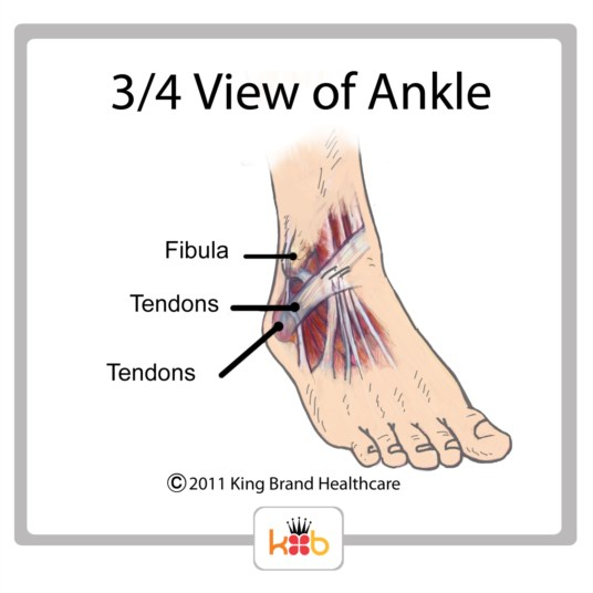 King Brand Ankle Injury Three Fourths View Tendons Bones Diagram Image Labelled