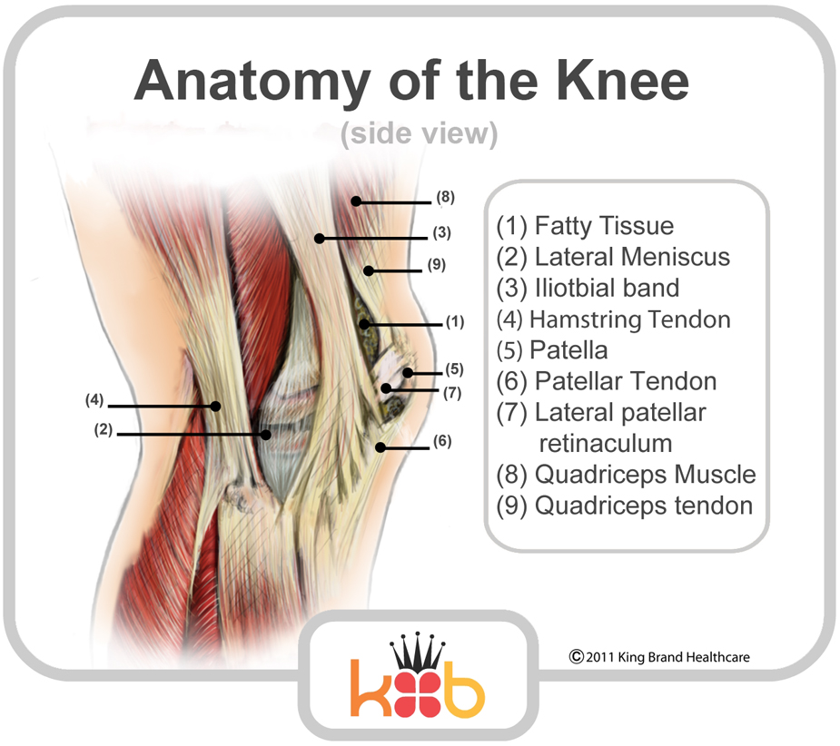 King Brand Anatomy of the Knee Diagram Image Knee Injury Solutions